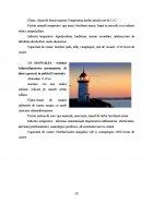 Atestat Turismul pe litoral factor al dezvoltarii turismului romanesc - imaginea23